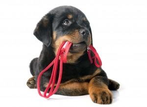 renforcement-positif-chien
