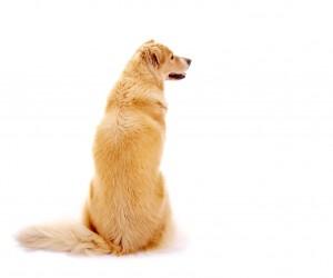 Hund – Rückenansicht