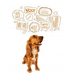 communication-homme-chien