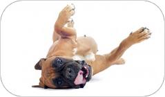 educateur-canin-var